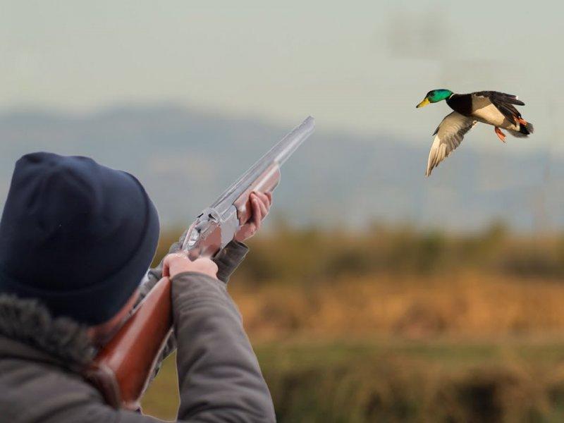 На Дону убивают птиц, чтобы они не болели гриппом