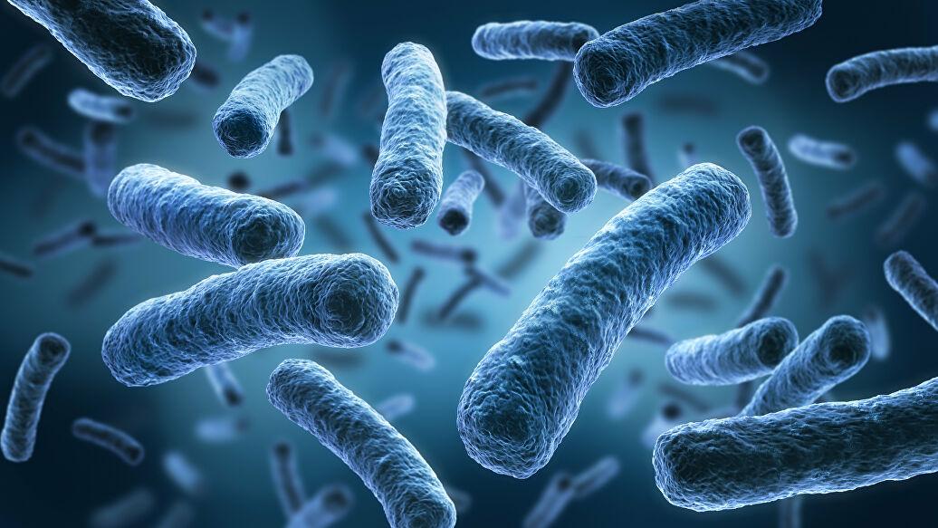 Биологи нашли слабое место у супербактерии золотистого стафилококка