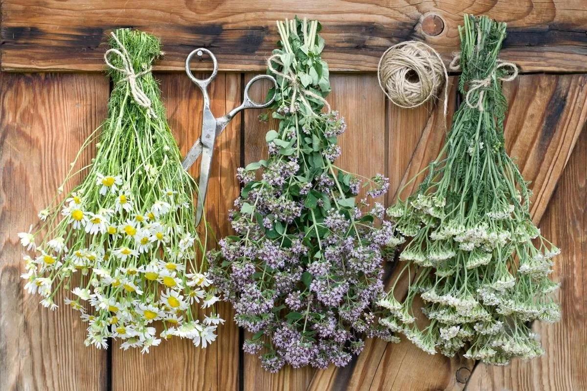 20 травяных рецептов при гепатитах