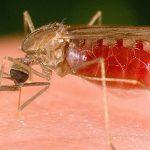 Новое открытие может помочь в лечении малярии