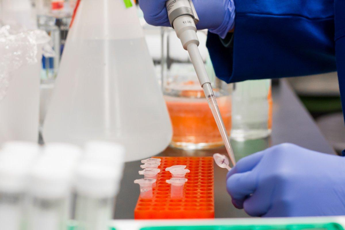 Лихорадка денге обеспечивает иммунитет к коронавирусу
