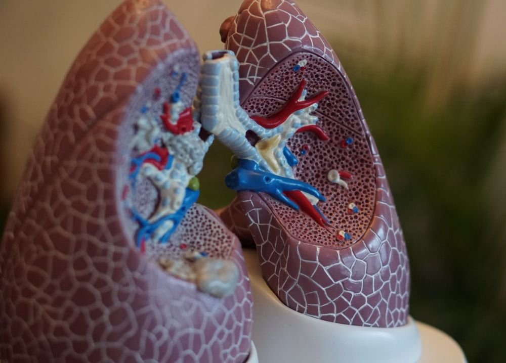 Исследователи создали легкие на чипе для изучения туберкулеза