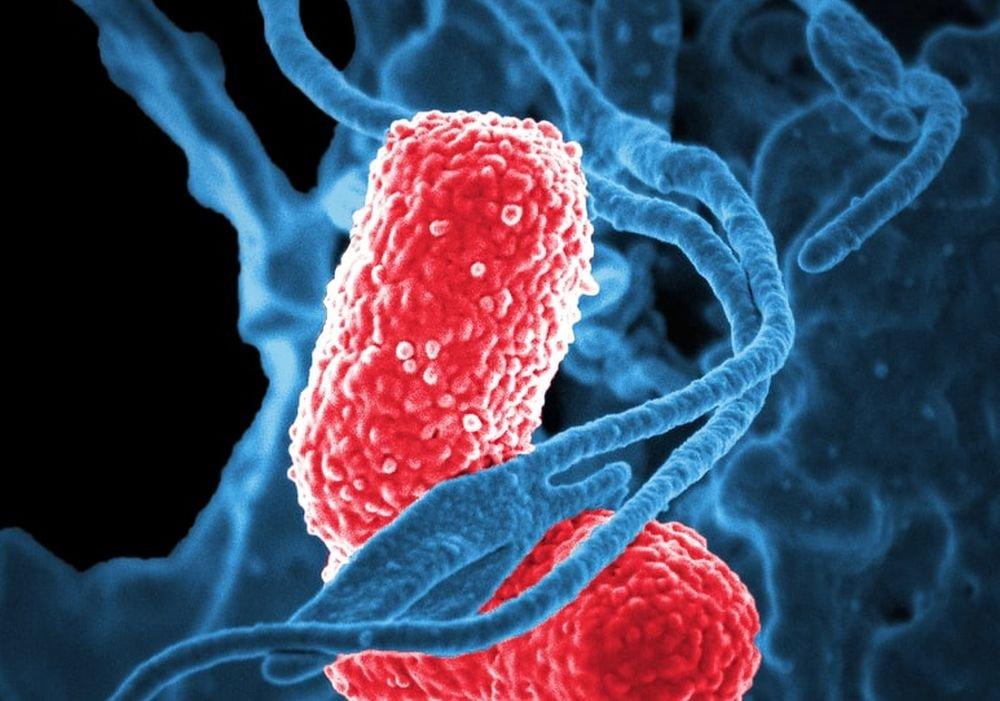 Заражение гриппом увеличивает риск пневмонии