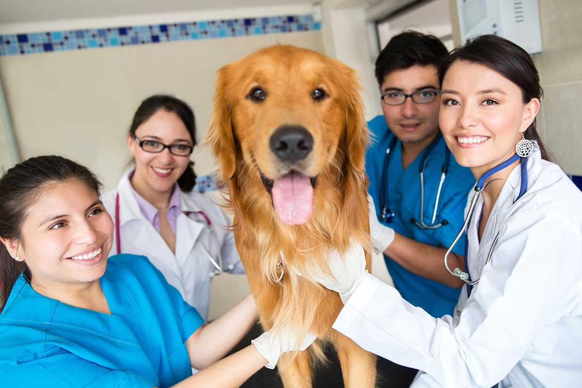 Ветеринарные клиники Восток